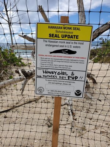 monk-seal-sign